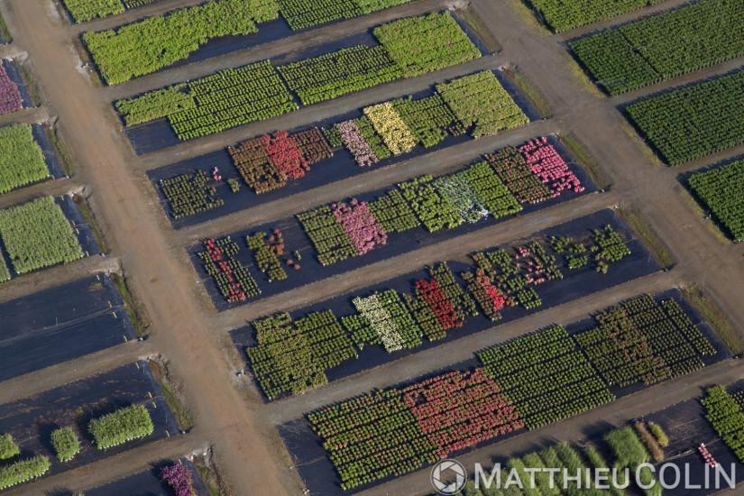 Angers, Sainte-Gemmes-sur-Loire, Guinefolle, agriculture maraîchère, pepiniere Minier (vue aérienne)