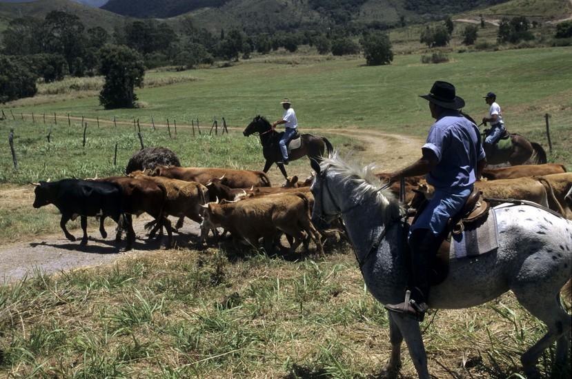 NOUVELLE CALEDONIE - Far-west français au bout du monde  - Chez les cow-boys français du pacifique Sud. Pionniers involontaires, ils ont fait de cette côte aride et sèche leur fief. Plus qu'un folklore, leurs traditions sont empruntées aux cow-boys australiens... (60 photos) Voir le reportage sur Divergence-Images