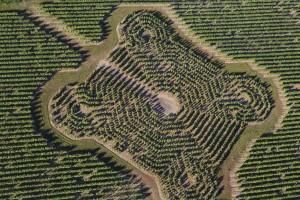 France, Maine-et-Loire (49), pays de Saumur, Turquant, Demeure le clos de la Vignole au bord de la Loire, vigne géométrique   (vue aérienne)