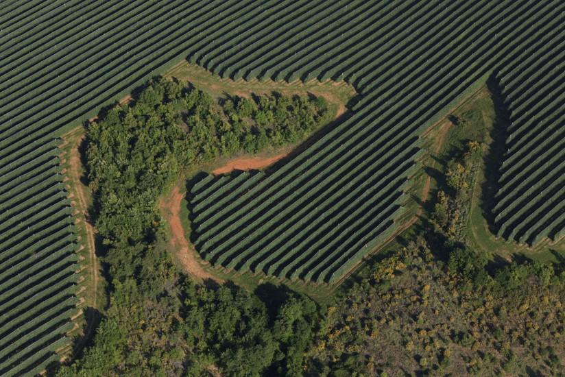 Arboriculture, plateau de la Colle