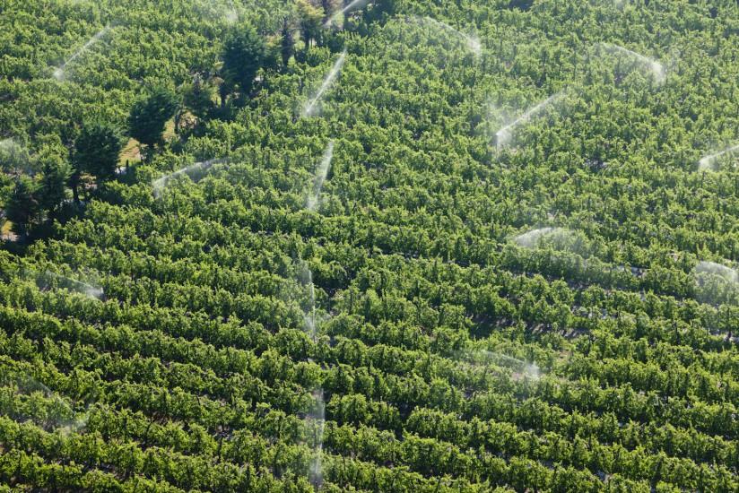 Culture arboricole à Cavaillon