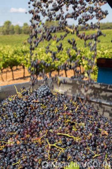 AOC Coteaux Varois en Provence