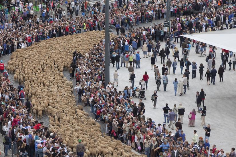 Traversée de Marseille par 3600 moutons, chevaux et vaches le 9 juin 2013. Le théâtre du Centaure. Reporatge à Marseille et aux Baux de Provence. Voir le reportage sur Divergence-Images