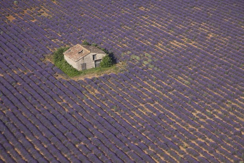 FRANCE - Paca - Alpes de Haute Provence et Var - Lavande à Valensole. Vues aériennes de la récolte de lavande sur le plateau de Valensole. (46 photos) Voir le reportage sur Divergence-Images