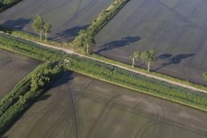 france, Bouches-du-Rhône (13), parc naturel régional de Camargue, Port-Saint-Louis-du-Rhône, rizière de riz camarguais s (vue aérienne)