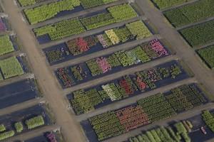 France, Maine-et-Loire (49), Angers, Sainte-Gemmes-sur-Loire, Guinefolle, agriculture maraîchère, pepiniere Minier (vue aérienne)