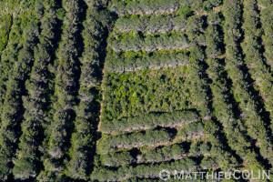 France. Corse du Sud (2A), commune  de Piana,  ponte a Lecchia  (vue aérienne)